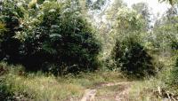 ที่ดินเปล่าหลุดจำนอง ธ.ธนาคารกรุงไทย นราธิวาส ระแงะ บาโงสะโต